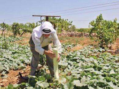 Photo of الفلسطينيون يزرعون الخضراوات بحدائق المنازل