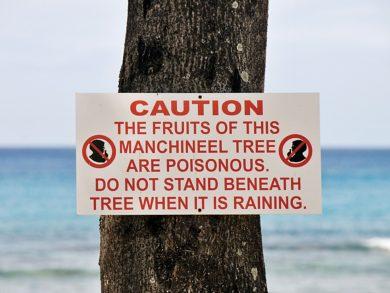 Photo of أخطر شجرة في العالم على الإنسان
