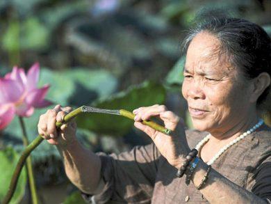 Photo of حرير اللوتس في فيتنام .. نسيج صديق للبيئة