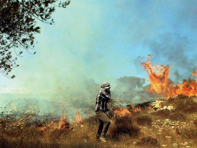 Photo of الزيتون الفلسطيني يحترق