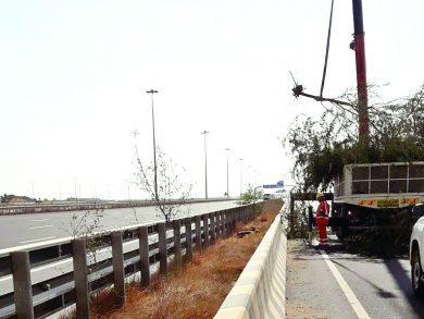 Photo of إزالة أشجار الغويف الضارة بطريق الشمال