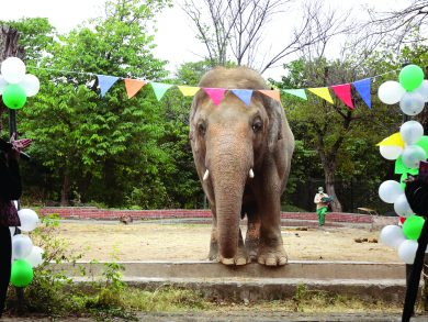 Photo of حفلة وداعية لفيل في حديقة حيوان ب «إسلام آباد»