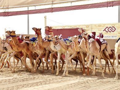 Photo of انطلاق منافسات مهرجان سمو الأمير الوالد للهجن العربية الأصيلة