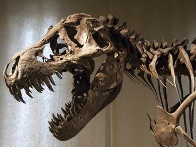 Photo of حفرية ديناصور عمرها 98 مليون سنة في الأرجنتين