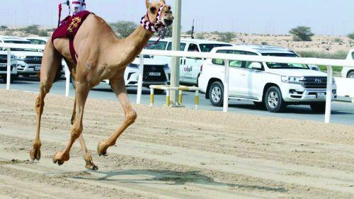 Photo of انطلاقة قوية لمنافسات السباق المحلي الثامن للهجن